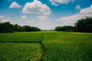 uralchem fertilizer for wide range of crops