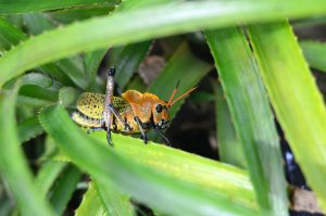Things to be considered in Pest Control